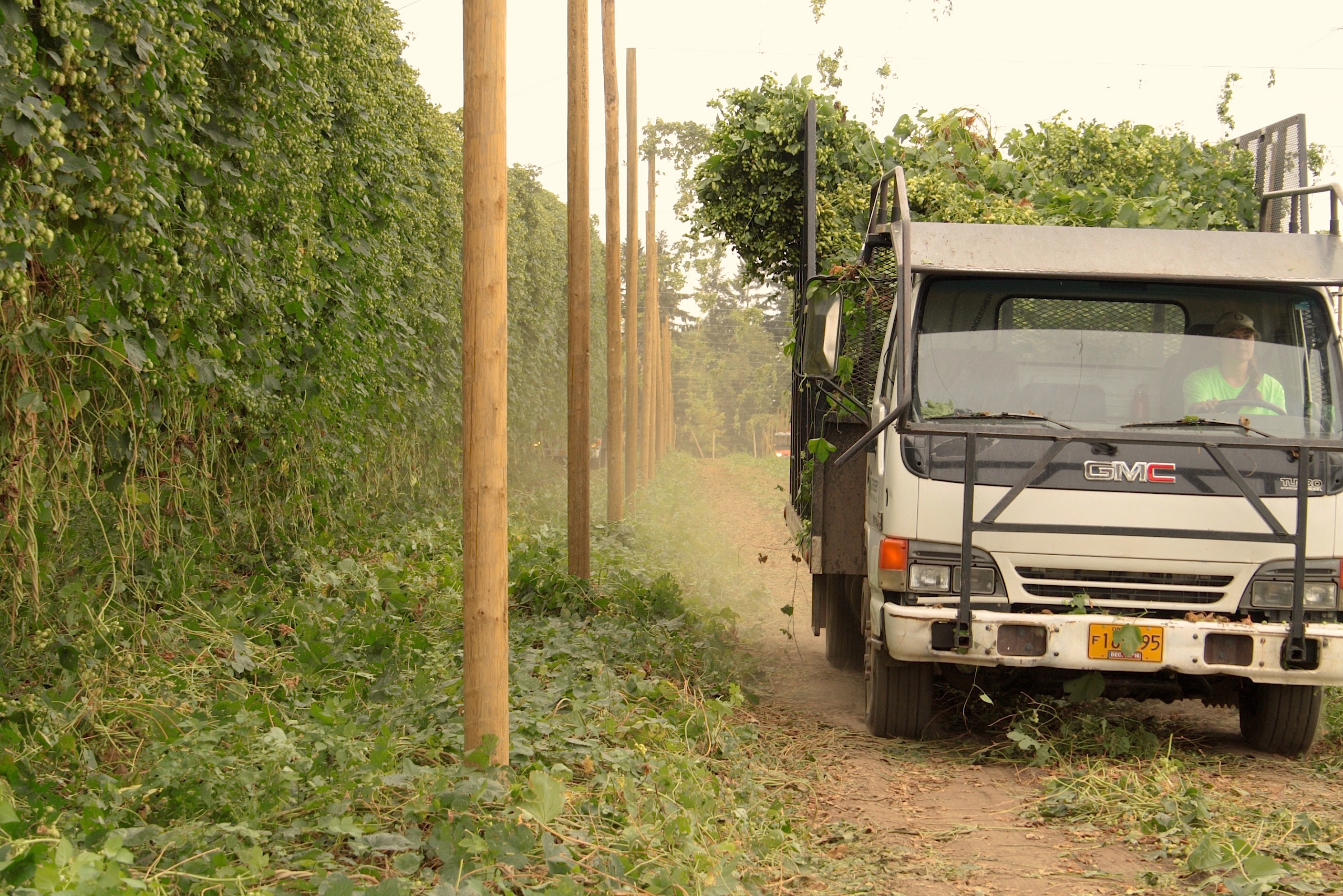A-Crosby-Hop-Farm-truck-leaving-the-hop-yard-with-freshly-picked-Amarillo-Hops-during-the-2016-harvest.-photo-by-Ryan-Spencer