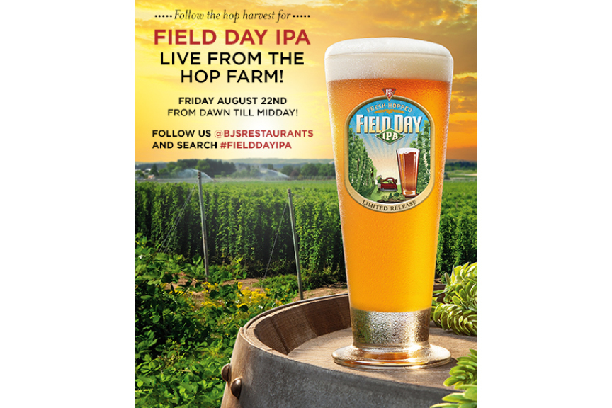 Field-Day-IPA-Hop-Harvest